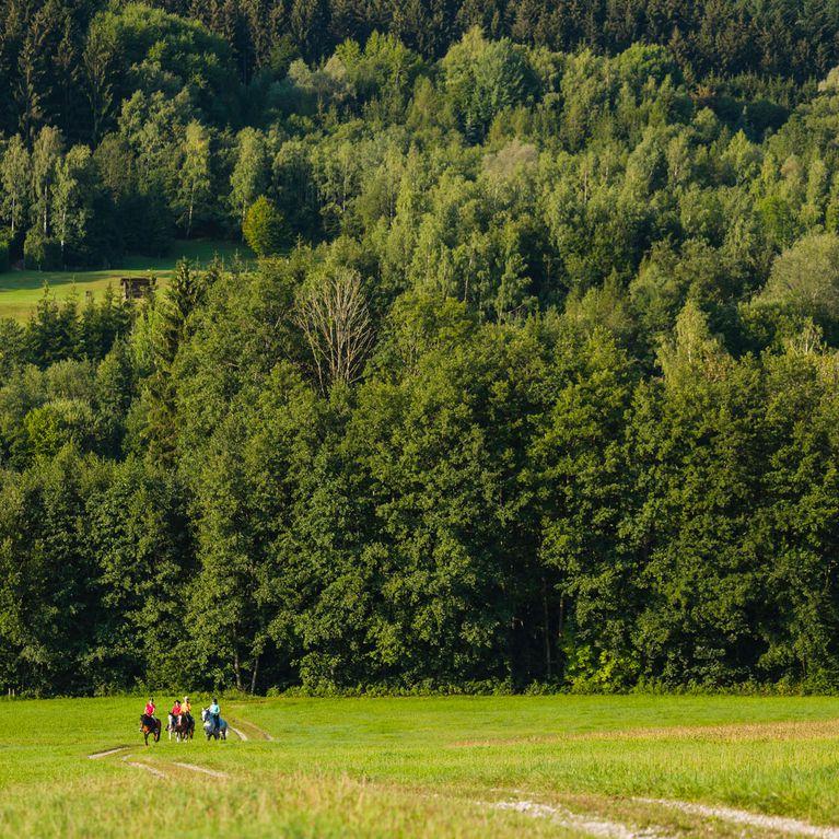 Singletreffen aus sll: Ampflwang im hausruckwald single freizeittreff